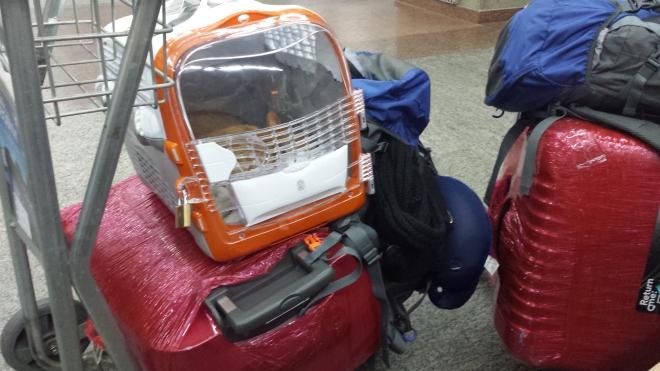 Duas das nossas malas devidamente embaladas, nossas duas mochilas (bagagem de mão) e o Irlandês, Dexter.